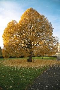arbre-retouch